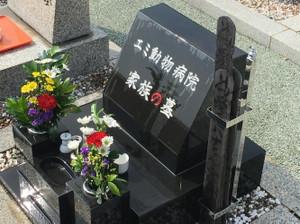 Takara35