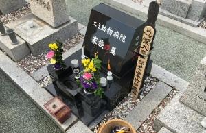 Takara37